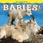 Glacier Babies! (2009, Hardcover)
