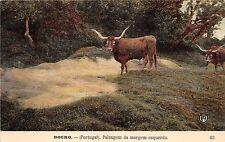 B93061 douro portugal paisagem da margem esquerda cow vaches