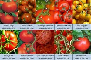 Tomatensamen-10-Sorten-International-Italien-USA-Peru-GB-Griechenland