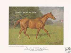 """Hengst /""""Exceslsior/"""" Volkers Zuchtpferde Pferde Farbdruck 1925 Reprint"""