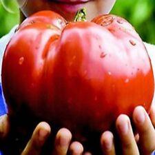 50 Heirloom Giant Monster Tomato Seeds