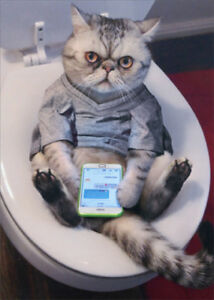 Avanti-Cat-On-Toilet-StandOut-Pop-Up-Funny-Birthday-Card