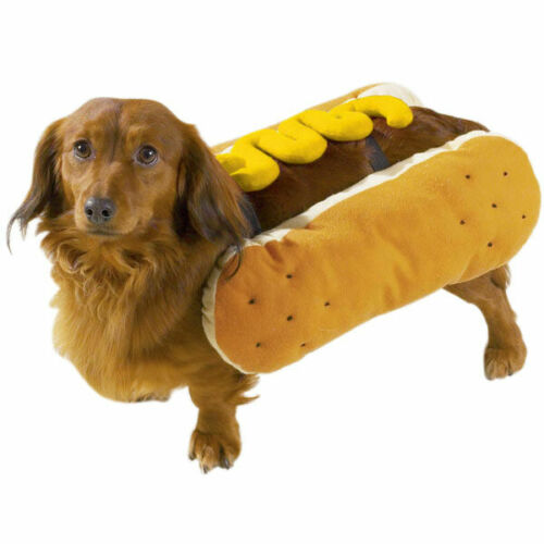 Casual Canine Hot Diggity Dog Mustard Dog Costume Small