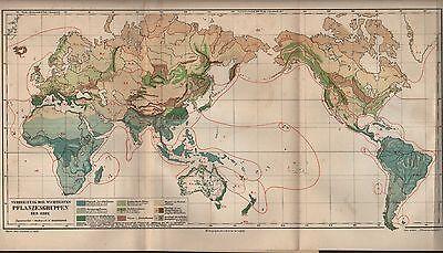 Landkarte Map 1909: Verbreitung Der Wichtigsten Pflanzen-gruppen Der Erde. GroßE Vielfalt