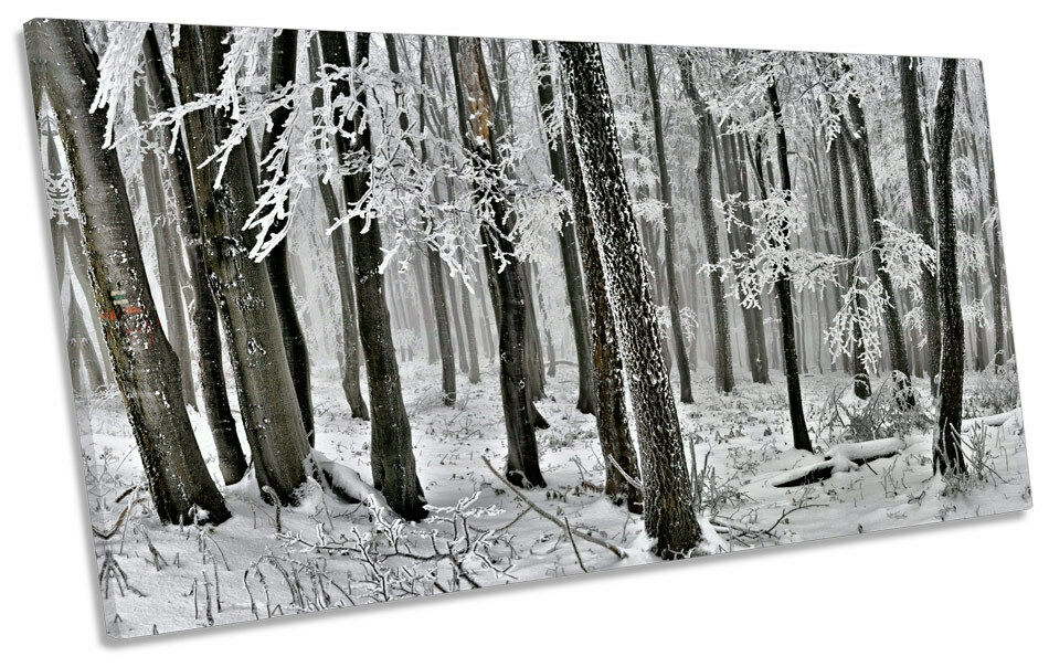 Winter Forest Landscape Trees PANORAMA CANVAS WALL ART Picture Print