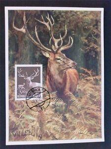 Appris Austria Mk 1959 1065 Chasse Cerf Deer Maximum Carte Maximum Card Mc C6505-afficher Le Titre D'origine 100% De MatéRiaux De Haute Qualité