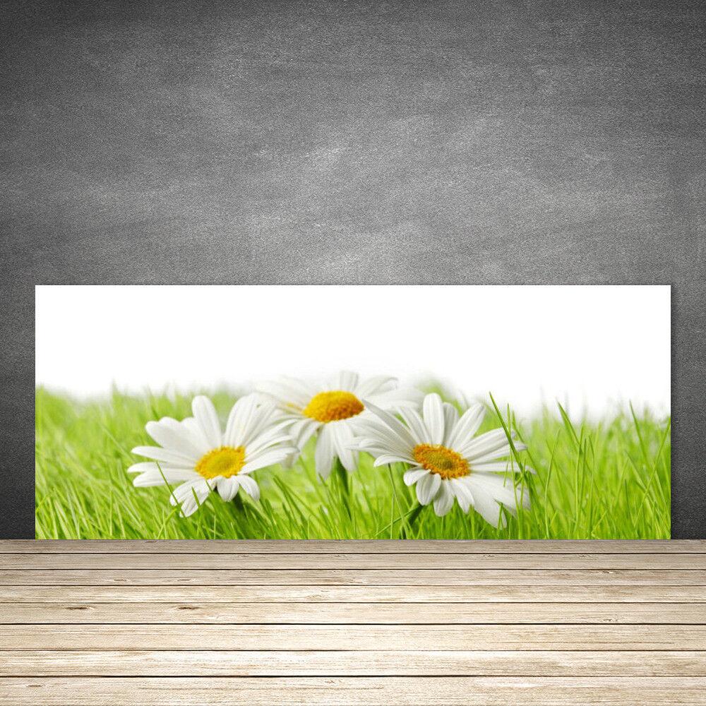 Crédence de cuisine en verre Panneau 125x50 Floral Marguerite Herbe