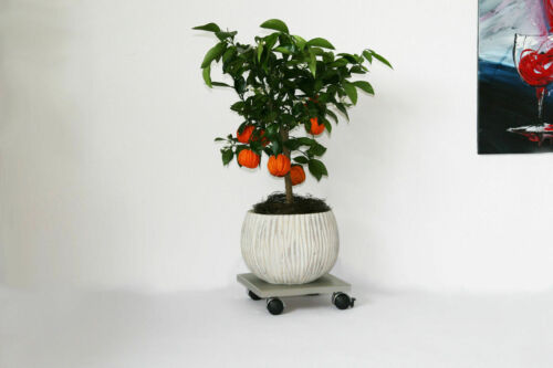 Möbelroller Pflanzenroller Blumenroller 30x30cm Edelstahl 120kg Chromrolle