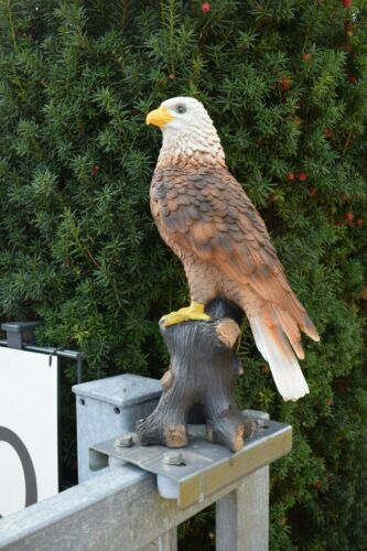 Falke Adler Deko Vogel Weißkopfadler Seeadler Wald Greifvogel Tier Natur Neu
