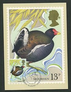 100% De Qualité Gb Uk Mk 1980 Oiseaux Teichhuhn Moorhen Carte Maximum Card Mc Cm D6180-afficher Le Titre D'origine Grand Assortiment