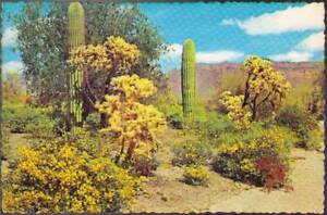 wpx-Postcard-Spring-s-Colorful-Touch-Brightens-the-Desert