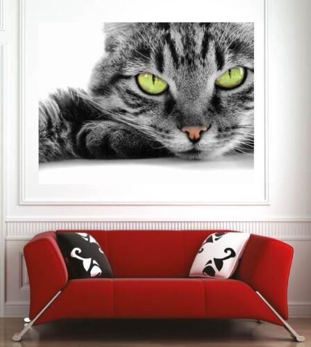 Affiche poster décoration murale Chat réf 35493205 6 dimensions
