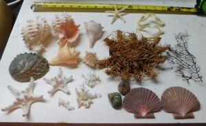 Mixed-Starfish-Dried-Sea-life-Shells-Craft-collector-Decor-Lot-39-L