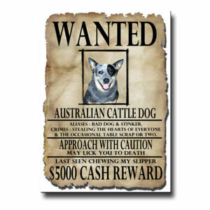 AUSTRALIAN CATTLE Wanted Personalized Magnet With Your Dog/'s Name