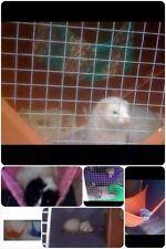 2in1 cosy large hammock/corner hammock : ferret,rat,chinchilla,degu.8+ Colours