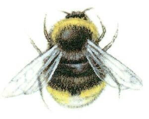 Black Bumble Bee >> Details About Black Yellow Bumblebee Bee Bees Select A Size Waterslide Ceramic Decals Bx