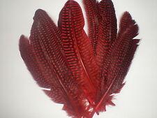 lot de 10 plumes pintade 18 cm rouge