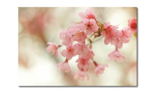 """Das Wandbild /""""Cherry Blossoms/"""""""