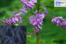 DR T&T 500g dry herb of Qing Dai / Indigo Naturalis