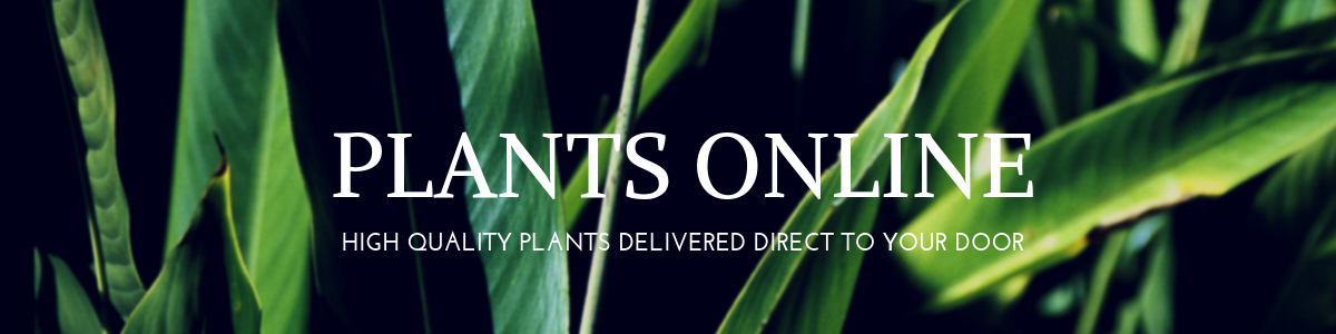 plantsonline