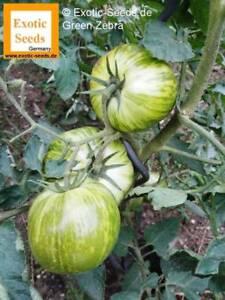 Tomate-039-Green-Zebra-039