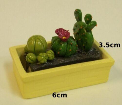 gros bac avec des cactus miniature,fleur,vitrine,maison de poupée,serre ****P2-5