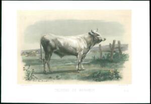 1864-Large-Antique-Lithograph-CATTLE-BULL-Cow-TAUREAU-MARIAHOF-Baudement-30