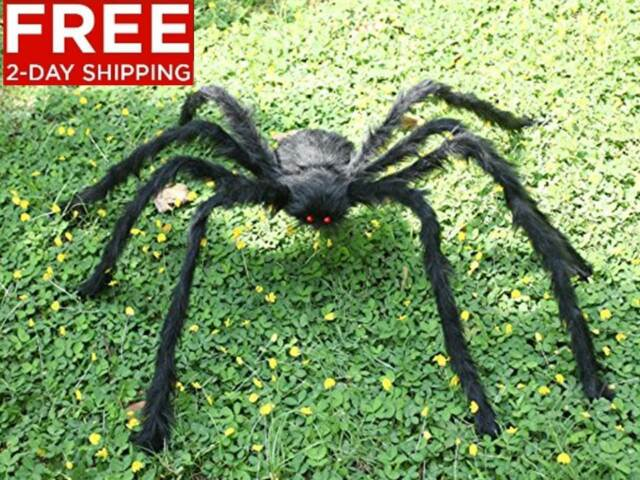 Will pictures of big huge hairy spiders idea and