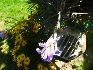 sur-tige-plantes-aeriennes-terrasse-verriere-jardin-4-a-6ramifications