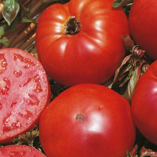 Tomato Marmande 75 Seeds Vegetable