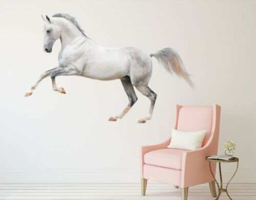 Details about  /3D  Pegasus I86 Animal Wallpaper Mural Poster Wall Stickers Decal Angelia