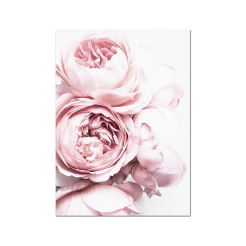 Peony Peonies Flower Art Print Poster Canvas Scandi Blush Pink and White pcint