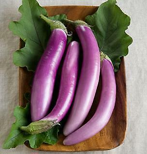 Eggplant Orient Charm    100 seeds  Need More Ask