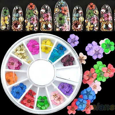 36Pcs 3D Dried Flower Nail Art Stickers Wheel DIY Tips Acrylic Decoration B54U