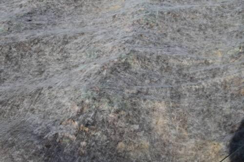 Ernteschutzvlies Vlies Ernteschutz Abdeckvlies Wachstumvlies 30g 1,6m x 40m