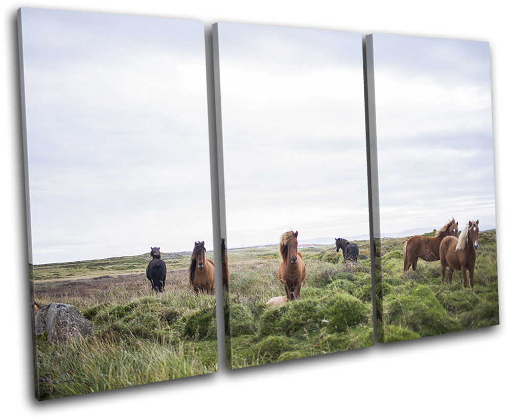 Horses Nature Landscapes TREBLE Leinwand Wand Kunst Bild drucken