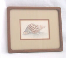 """Sea Shell Theme(A) D. Morgan-Signed/Double Matted/Framed  10 1/2 X 8 1/2"""""""