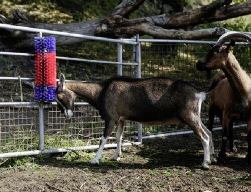 Kratzbürste halbrund Viehkratzbürste Schwein Kuh Ziege Pferd Viehbürste  293100