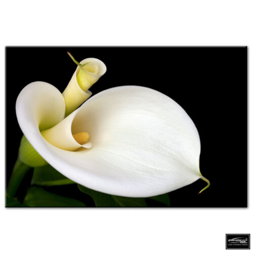 Floral Calla Lily Flowers   BOX FRAMED CANVAS ART Picture HDR 280gsm