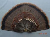 Adult Eastern Wild Turkey Tail Fan/turkey Feathers/dave Smith Decoys