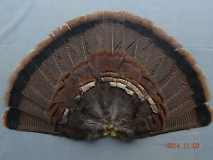 ADULT EASTERN WILD TURKEY TAIL FAN/TURKEY FEATHERS/TURKE<wbr/>Y DECOYS