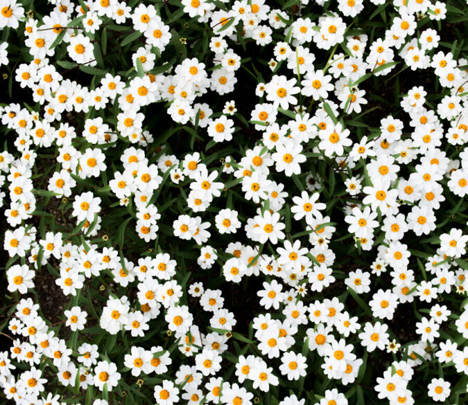 3D Pure flowers 1 WallPaper Murals Wall Print Decal Wall Deco AJ WALLPAPER