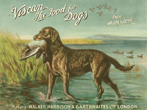 "CHESAPEAKE BAY RETRIEVER DOG GREETINGS NOTE CARD /""VISCAN/"" DOG FOOD ADVERT CARD"