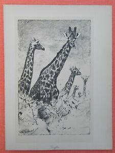 Belle Girafes Giraffe Giraffa Wilhelm Kuhnert Afrique Lithographie 1920-afficher Le Titre D'origine Divers Styles