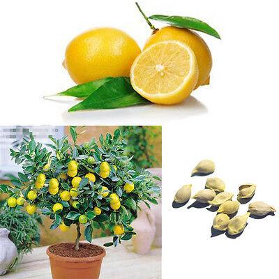 Garden 10Pcs Lemon Tree Seeds Rare Indoor Outdoor Heirloom Plants Fruit Seeds E