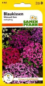Blaukissen - Dunkelpurpur - Steingarten-Polsterstaude - Blumen ...