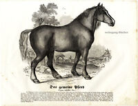 The Horse, 1841 Original Antique Wood Engraving.