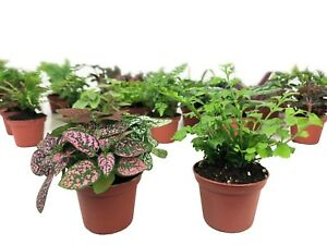 Mini Terrarium Fairy Garden Plants 2 Plants 2 Pots Ebay