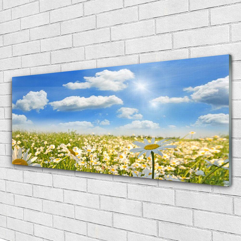 Tableau murale Impression sous verre 125x50 Nature Marguerite Prairie