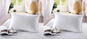 2 Firm Goose Down Filled Pillows Standard Queen And King